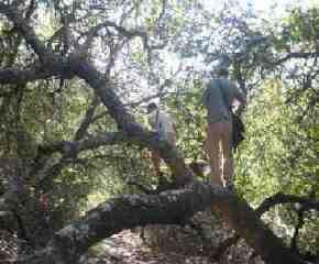 yoga exercise like a wild tree